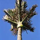 Nikau Palm by ardwork
