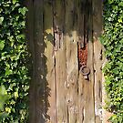 Old door in the garden is closed by mrivserg