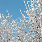 Hoarfrost on branches of a tree by mrivserg