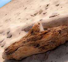 Driftwood on Beach #1 by Image11
