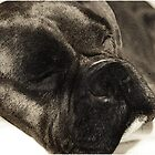 Dark brindle boxer in dreamland by ritmoboxers