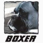 Black and white boxer headshot by ritmoboxers
