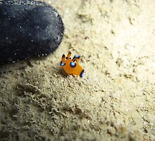 Super Nudi by Michael Powell