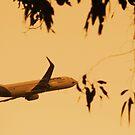 plane by xXDarkAngelXx