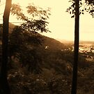 forest by xXDarkAngelXx
