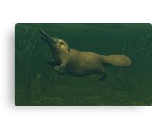 Platypus Canvas Print