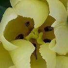 tulip heart by ZELLEN