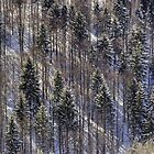 snowy trees by xamad