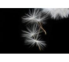 Dandelion Glow Photographic Print