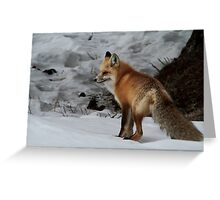 Red Fox #1 Greeting Card