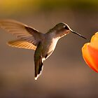 Sun Setting on a Hummer &amp; Tulip by Daniel J. McCauley IV