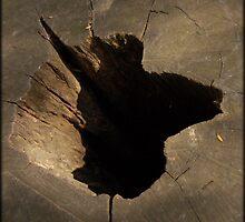 La méditation de l'arbre by Puyravaud Frédéric