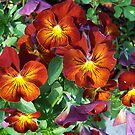 Array of Pansies by LoneAngel
