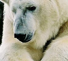 Polar bear by julie08