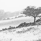Billberry Snow by sbpphotography