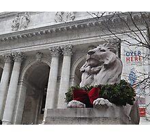 Lion Sculpture, New York Public Library, New York City Photographic Print