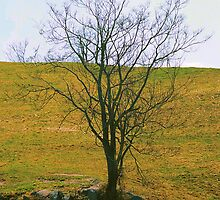 Spring Tree (card series) by crashandburn