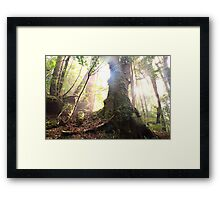 Enchanted Forest, Franklin-Gordon Wild Rivers National Park, Tasmania  Framed Print