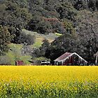 Napa Valley Landscape by NewDawnPhoto