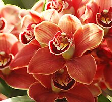 Orange Orchids by Kathleen Struckle