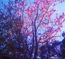 blue skies.....  by Juilee  Pryor