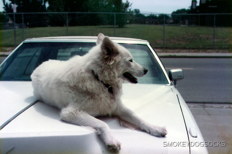 TIMBER WOLF CADILLAC by SMOKEYDOGSOCKS