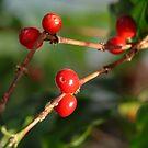 Coffee Beans by Merilyn