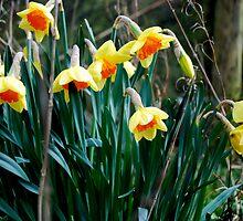 Spring by shakey