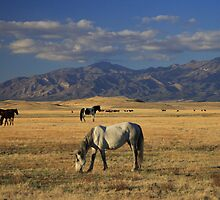 Wide Open Spaces by Gene Praag