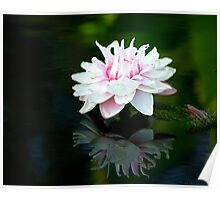 Water Lilies Reflections Poster