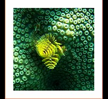 Brain Coral Feeding by George  Link
