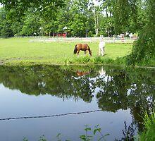 Horse in Berkshires 1 by Christine Frydenborg Dargon