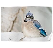 Blue Jay In Spring 2 Poster