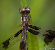 Injured Dragonfly by BLaskowsky