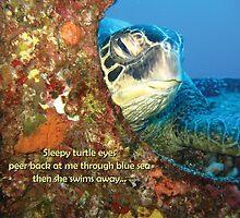 Sleepy Turtle by sailgirl
