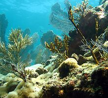 Molasses Reef by George  Link