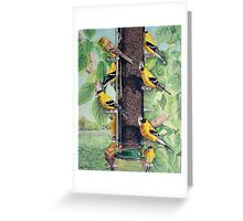 Finch Cuisine  Greeting Card