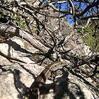 Lizard Rock by paulhosk