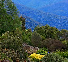A View Across the Blue Mountains from Mt Tomah by Maggiebee