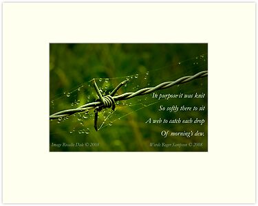 Collaboration ~ Beauty and the Barbed Wire by Rosalie Dale