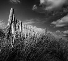 Steadfast by Gary Tumilty