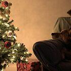 Dreaming of Santa by Michael McCasland