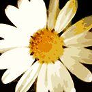 WHITE DAISY , FREEFORM SIMPLISTIC ~OIL ON CANVAS by LacewingDesign