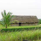 122514 mayan life by pcfyi