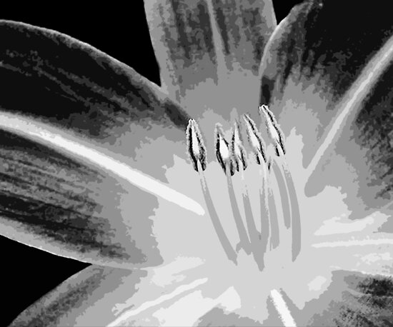 TIGER LILY ~ MONOCHROME ~ WIDE BRUSH OIL ON CANVAS by LacewingDesign
