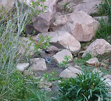Calico Basin (Digital) #5 by Snoboardnlife