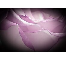 Lavender Rose - Macro  Photographic Print