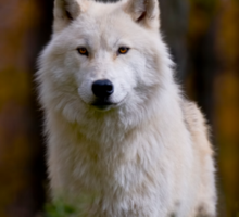 Arctic Wolf Sticker