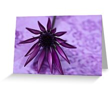 Gazania Flower Macro - Lavender Background  Greeting Card