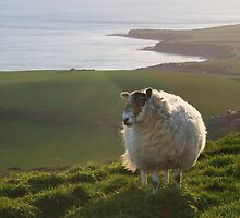 Here's Looking At Ewe, Kid! by RedHillDigital